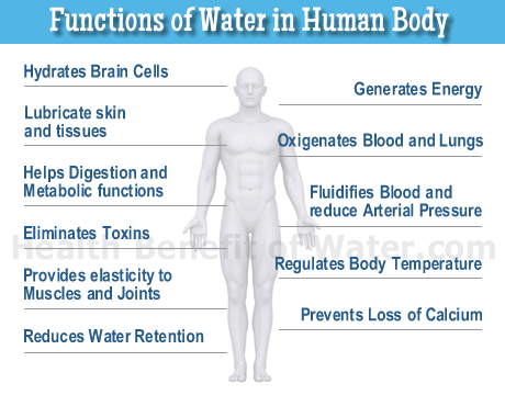 the importance of fluids and hydration for the human body The human body consists of nearly 60 per cent water brain tissue is said to consist of about 85 per cent water this is why drinking 6–8 glasses of water a day helps our body function efficiently although fluid loss occurs during hard physical work, even simple tasks like gardening, walking or riding a bike can result in a.